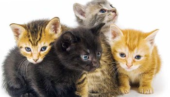 Finding-homes-for-your-kittens-1.png